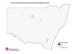 Feral camel occurences 2016