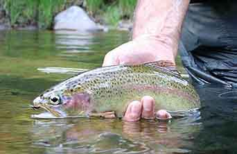 Trout caught at Upper Geehi River