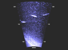 A school of mullet as depicted by the sonar camera.