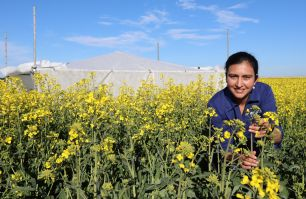 Rajneet Uppal inspecting canola plants in a field