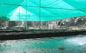 Figure 3. Dairy feedpad covered with shadecloth and fitted out with sprinklers at Wollongbar Agricultural Institute