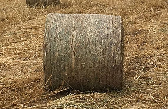 Photo showing a closeup of a single round bale (Photo: Mel Case)