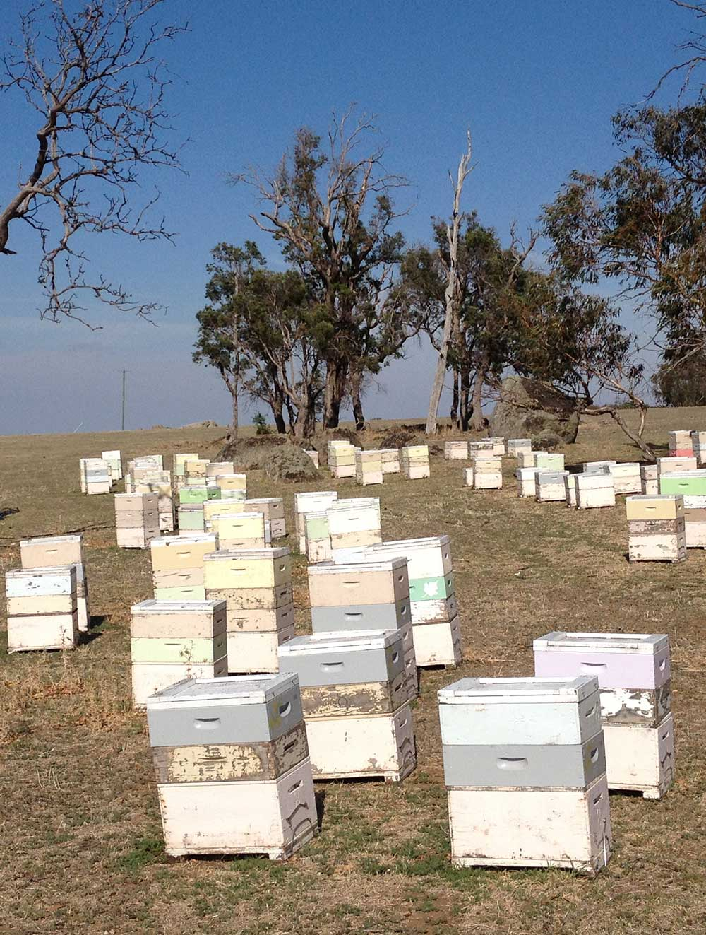 Bee hives in a paddock