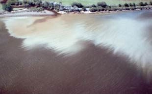 Figure 1. A toxic plume of acidic water entering an estuary - a result of drained acid sulfate soil (Photo: Scott Johnston)