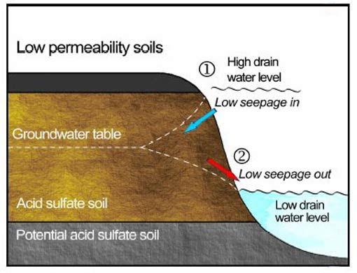Figure 2. Groundwater flow and groundwater/drain water level relationships in low permeability ASS. 1 shows a high drain water level (i.e. from floodgate opening) and low seepage away from the drain into the ground. 2 shows a low drain water level and low seepage of groundwater towards the drain.