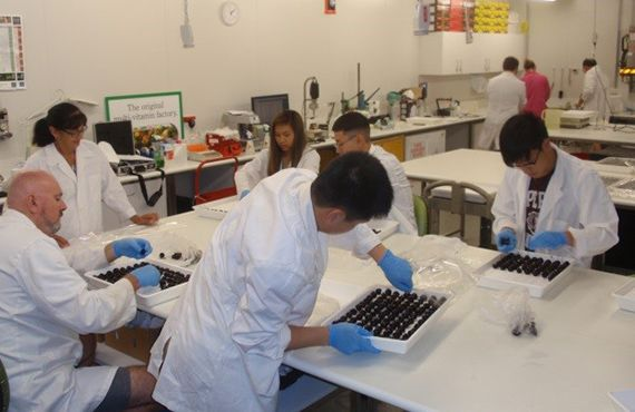 Postharvest treatments being done by lab technicians