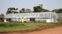 The new rice breeding glasshouse at Yanco Agricultural Institute, commissioned in 2006. Photo: Mark Stevens