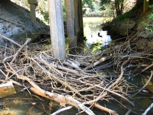 An example of a bridge where debris accumulation has become a barrier for fish.