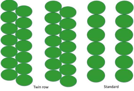 Twin row layout vs a single row layout