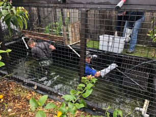 Two officers in waders enter an enclosed pond with retrieval gear