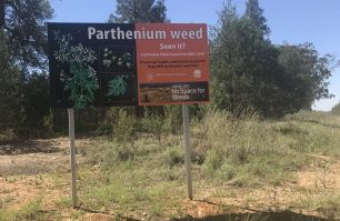 Parthenium weed sign in Parkes NSW