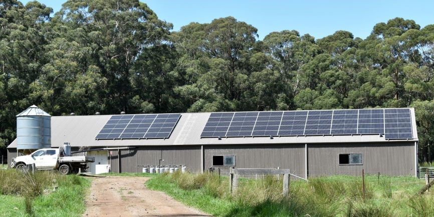 Farm shed showing solar panels at Pecora Dairy NSW with dirt road farm vehicle and surrounding bushland