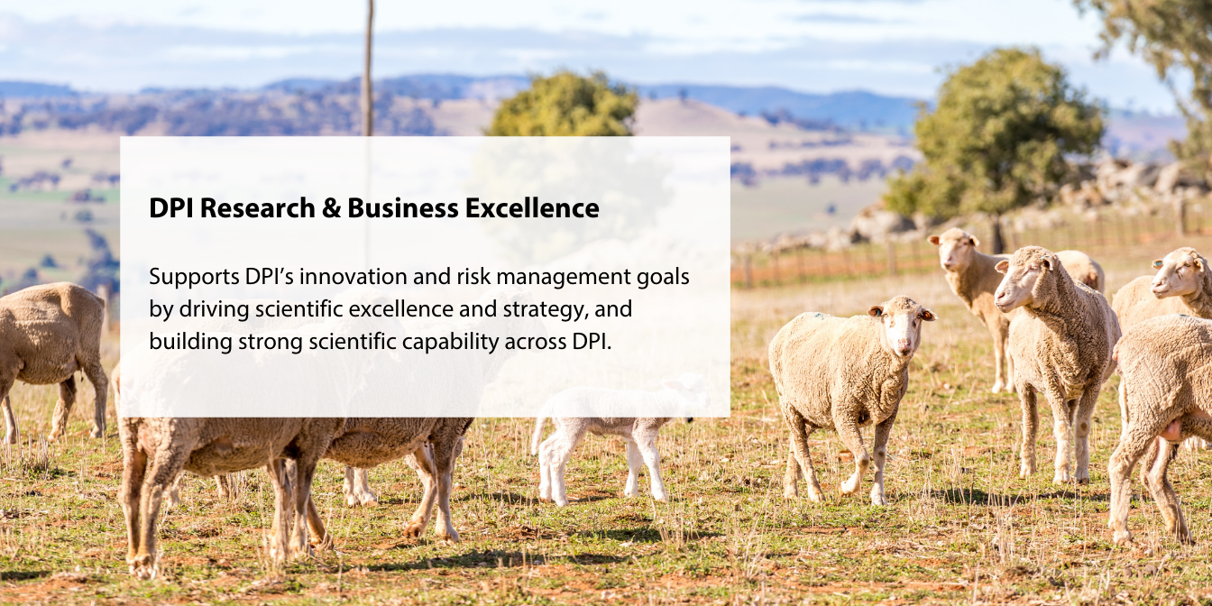 DPI Research & Business Excellence