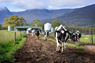 A joint project led by NSW Department of Primary Industries (DPI) in collaboration with Dairy Australia and DeLaval has launched a world-first decision-support tool for pasture-based automated milking systems