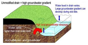 Figure 3 (above). A diagram representing the seepage of acid groundwater to a drain. Low tides cause the drain water level to drop lower than the groundwater. The larger the difference, or gradient, the more groundwater seepage.