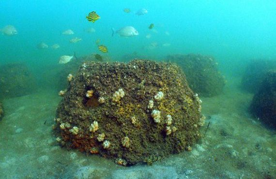 An underwater photos of an artificial reef in place.