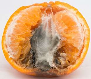 Mould inside an orange
