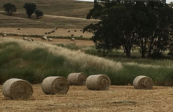 Photo of 5 round bales in the foreground (Photo: Mel Case)