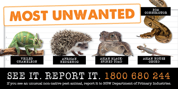 Most wanted non-native species