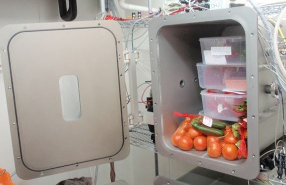 Various vegetables treated by low pressure device