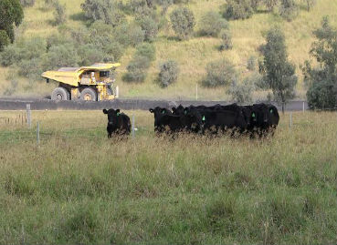 Grazing study shows positive results for rehabilitated mine land