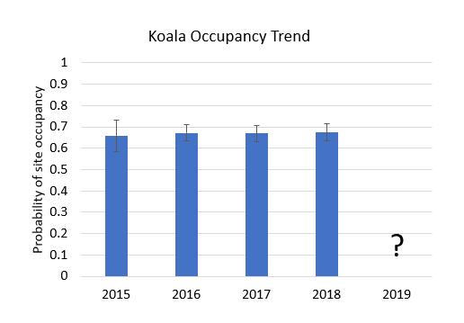 column graph showing koala occupancy trends