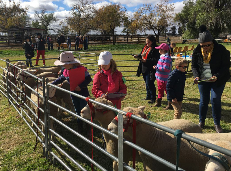 Young agricultural enthusiasts at previous Trangie Junior Show Judging Competitions.