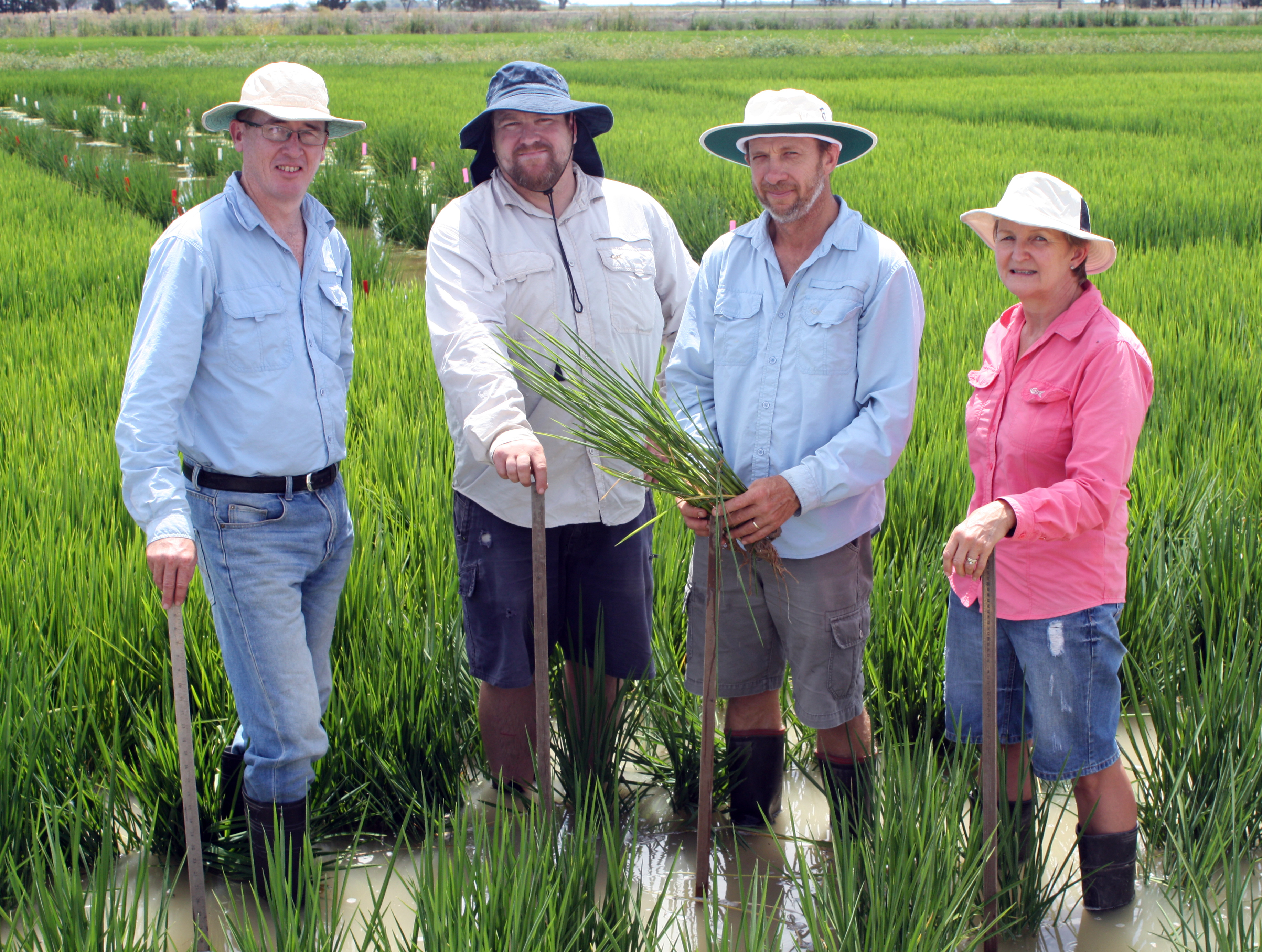 Chris Dawe, Craig Hodges, Brian Dunn and Tina Dunn standing in a rice field