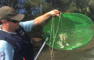 Fisheries officer holding up an opera style trap