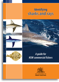 Identifying sharks and rays - cover
