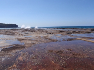 Narrabeen Head