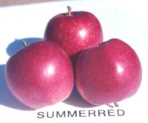 Summerred