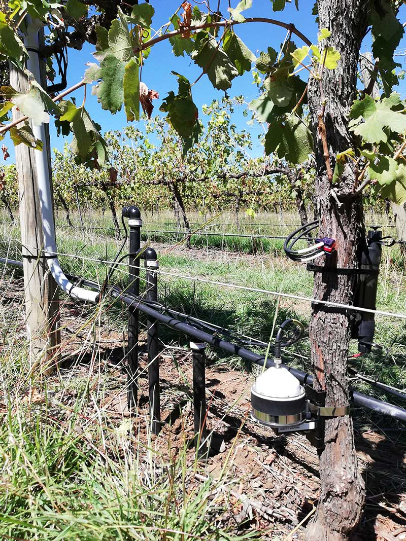 A grape vine monitoring device is affixed to a row of vines.