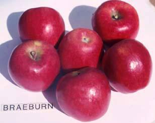 Braeburn
