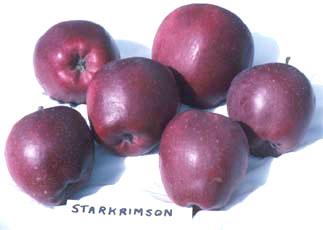 Delicious Starkrimson
